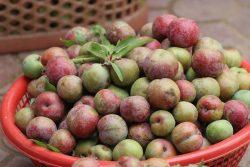 Mận – loại trái cây không phải ai cũng có thể ăn được