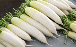 Bài thuốc trị lao phổi, tiểu đường đơn giản từ củ cải trắng