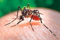 8 bài thuốc dân gian từ cỏ nhọ nồi chữa bệnh sốt xuất huyết hiệu quả