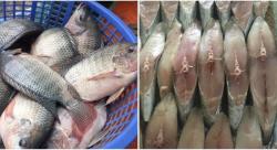 6 loại cá chứa thủy ngân và chất độc cao nhất, chồng con có thích ăn mấy mẹ cũng nên hạn chế